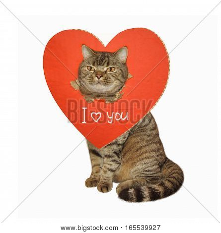 The cute cat is sitting. His head busted through a big red heart. White background.