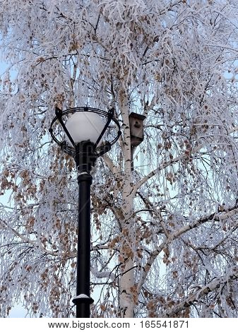 Lantern illuminates the small house for birds. In the park on a background of white birch trees adorned the lantern and birdhouse