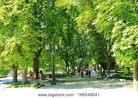 people walk in summer city park with big trees