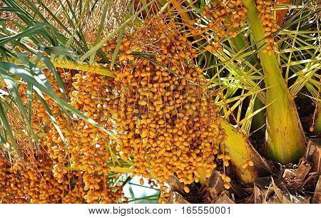 Detailed view of the exotic palm seeds