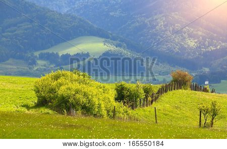 Green grass on mountain hills. Summer mountain landscape. Mountain background with sunbeams and lens flares