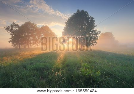 Morning sun shine through tree on blossom meadow. Bright sunbeams illuminate green grass on field. Colorful spring sunrise over meadow.