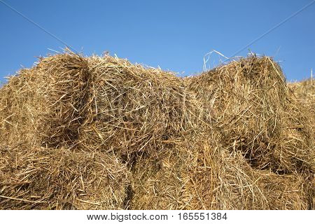 Lot of dry hay against clear cloudless blue sky closeup