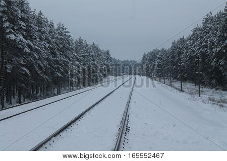 steel  two lines railway lay on pure plateau through pine forest empty in cold winter snowy day