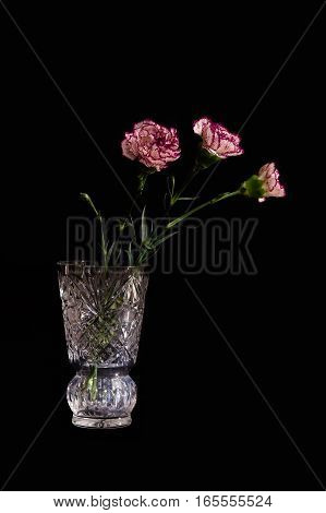 Flowers in a vase. Crystal vase. Flowers of carnations. Color photography on a black background.