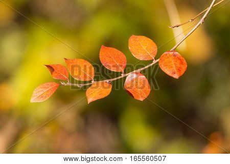 branch with red autumn leaves in the foreground