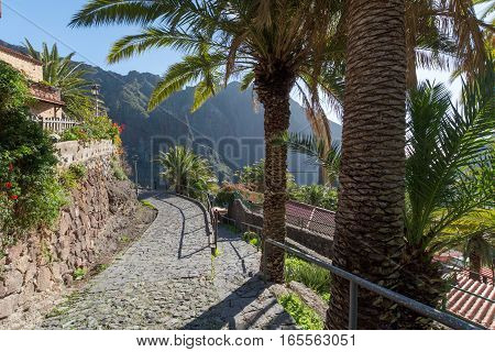 Nature in Masca Village Tenerife - palm trees and mountains