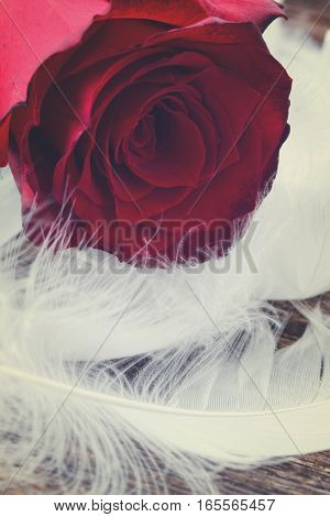 fresh red rose flower with wtite feathers, retro toned