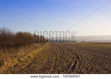 a hawthorn hedgerow near a field with tyre tracks and a pheasant feeder in a yorkshire wolds landscape with hills under a blue cloudy sky in winter