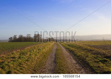 a rural farm track going towards a copse in a yorkshire wolds landscape with hills and hedgerows under a clear blue sky in winter