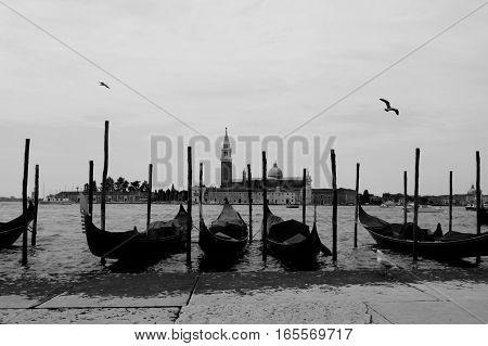 Row of four gondola's with birds in Venice Italy.