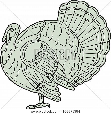 Mono line style illustration of a wild turkey viewed from the side set on isolated white background.