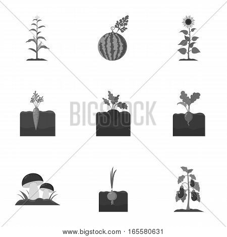 Plant set icons in monochrome style. Big collection of plant vector symbol stock
