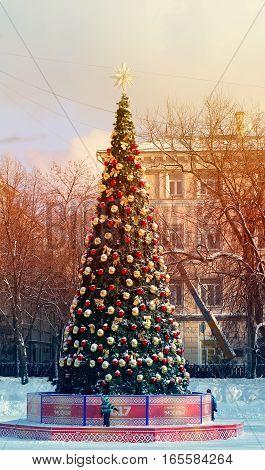 Photo miracle bright Christmas festive Christmas tree