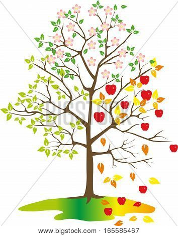 Tree with apples seasons on white blackground