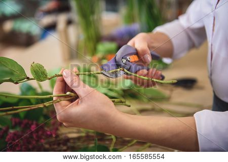 Close up of florist hand cutting flower branch by scissors