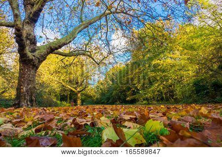 Fallen autumn leaves in a Rookery public park in Streatham in London