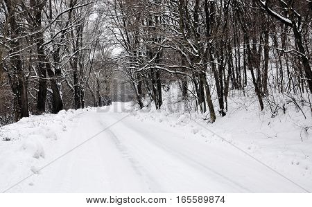 road in winter forest for your design