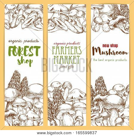 Mushrooms banners set. Vector sketch of edible mushrooms champignon, forest cep, morel, chanterelle, russule, milk mushroom honey agaric, Vegetaian or vegan food nutrition, truffle, woolly milkcap porcini. Gourmet