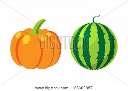 Fresh orange pumpkin and watermelon isolated on white background. Decorative fresh single seasonal ripe food. Thanksgiving stem healthy raw vegetarian vegetable.