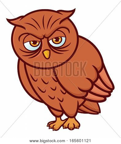 Owl Cartoon Animal Character Isolated on White