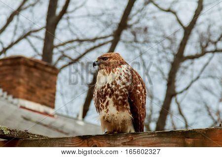European Eagle Owl. Eurasian . Close-up Face. Big Eyes. Wisdom. The Evil Eye.