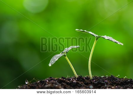 nature green sprout seed with water drop