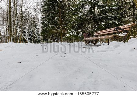 Winter park alley with a lonely bench against a background of snow-covered fir trees