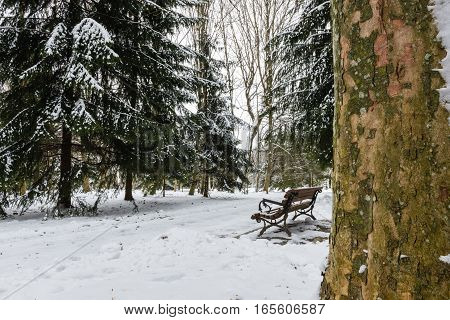 Vacant bench in winter park on a background of fir trees covered with snow. Possible date