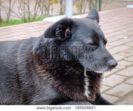 Black Dog Lying On Stone Road