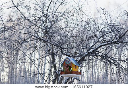 colorful bright bird feeder house on a tree