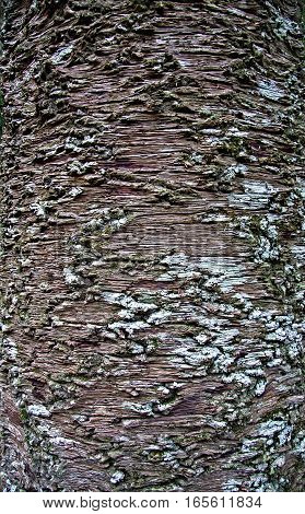 Bark of the tree texture background, nature