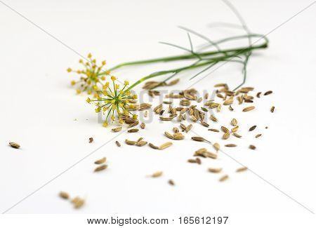 Fennel Seeds And Flowers Scattered On The White Background