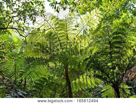 lookup to the sky and fern tree green leaves background