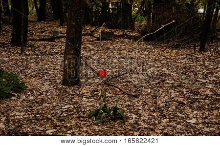Alone Tulip At Chernobyl Exclusion Zone, Ukraine