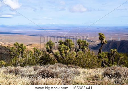 Field including Joshua Trees, Yucca Plants, and Sagebrush overlooking the Mojave Desert taken in Tehachapi Pass, CA