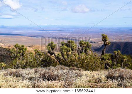 Field including Joshua Trees, Yucca Plants, and Sagebrush overlooking the Mojave Desert taken in Tehachapi Pass, CA