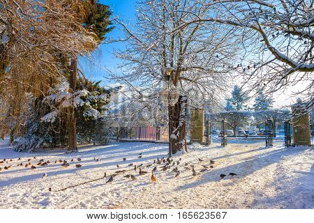 Entrance gates to the city park in Oliwa at winter.