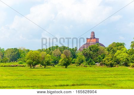 Anuradhapura Jetavanaramaya Stupa Distant H