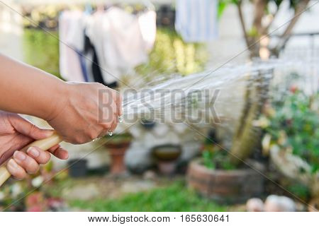 Human is spraying water from rubber strap watering a plant