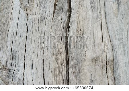 Texture of wood from the dead tree