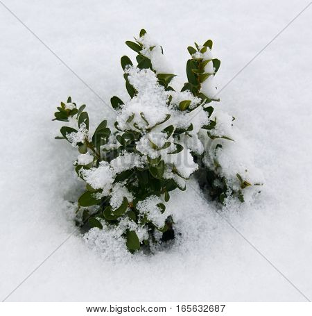 green plant flowers under first white snow