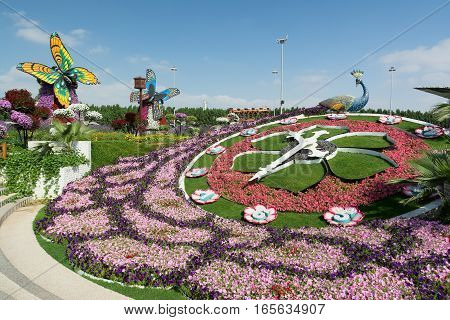 DUBAI UNITED ARAB EMIRATES - DECEMBER 8 2016: Dubai Miracle Garden is the biggest natural flower garden in the world with wide variety of different flowers arranged in shapes of hearts stars igloos pyramids and other figures.
