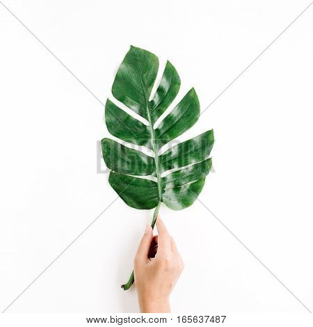 Hand holding tropical palm leaf. Flat lay top view