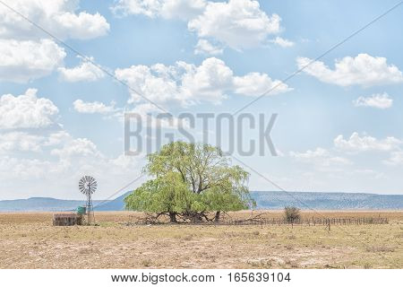 A water-pumping windmill dam kraal and willow tree near Jagersfontein a diamond mining town in the Free State Province of South Africa