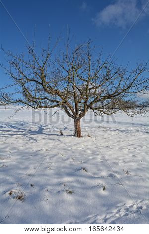 A tree in the snow with blue sky