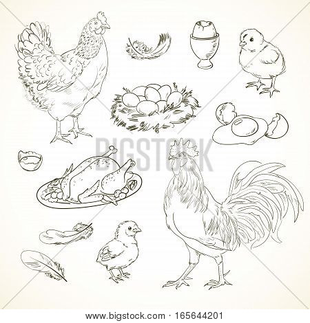 Freehand drawing chicken items on a sheet of exercise book. Vector illustration. Set. Black and white