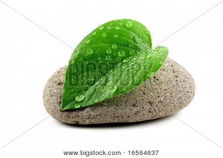 zen stone with leaf,isolated on white.