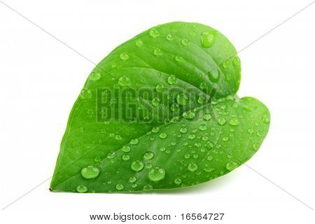 Green leaf with water droplets,Closeup.