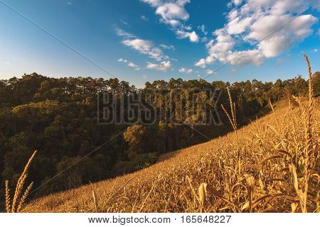 soft focus of rice farm landscape on mountain day noon light.